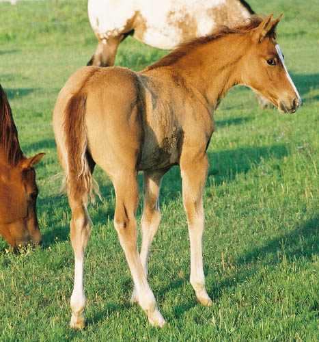 Invitational colt, pictured early May, 2004