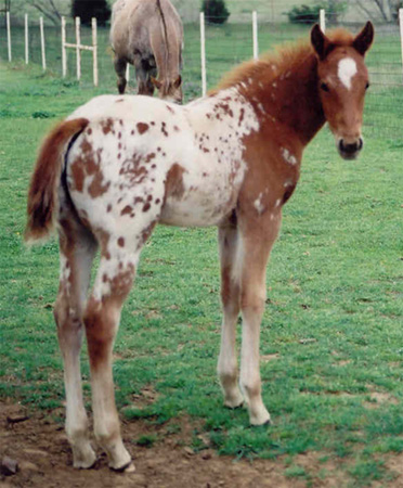 Charicature filly, pictured March 26, 2004
