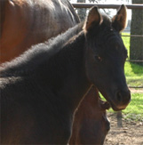 Charicature Filly pictured mid-March 2005.