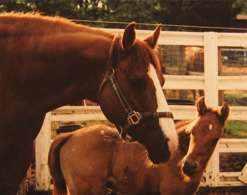 April 2, 2005 Charicature colt, pictured at 3 days