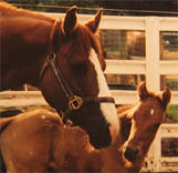 April 2, 2005 Charicature Colt pictured at 3 days.