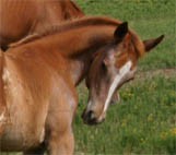 2005 Enlightened (AQHA) Filly
