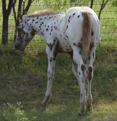 Charicature colt, pictured June 19, 2004