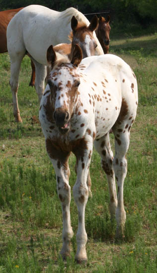 Charicature colt, pictured June 19, 2005