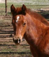 March 2006 Charicature Filly pictured March 25, 2006.