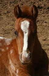 2006 Invitational Filly