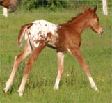 February 2007 Filly, Invitational x JJ Roman Marie