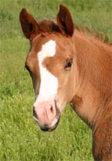 March 2007 Filly, Invitational x Miss Chili Pepper
