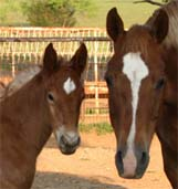 March 2007 Charicature Filly pictured April 20, 2007.