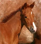 April 2007 Illustrator Filly pictured April 20, 2007.