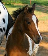 2008 Invitational Filly pictured April 2008.