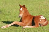 2009 Illustrator filly pictured April 2009.