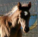 2009 Filly, Charicature x Alias Terlingua King