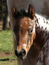 2010 Illustrator x Shes Way Cool colt pictured February 2010.