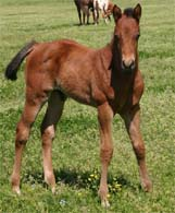2010 Illustrator x Precise Clu colt pictured April 2010.