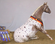Invied 2003 German National Champion